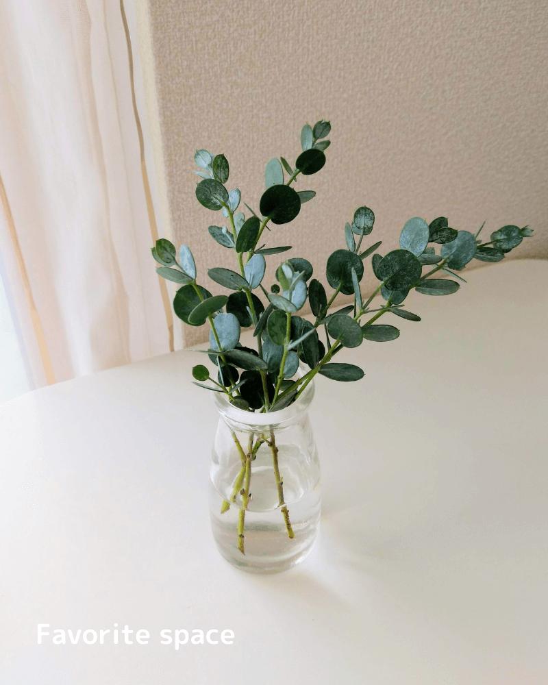 セリアの牛乳瓶の形の花瓶にユーカリを飾った画像
