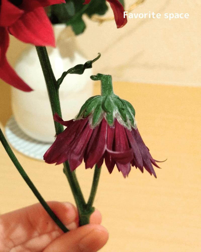 ひとはなの定期便の花が凍っていた時の画像